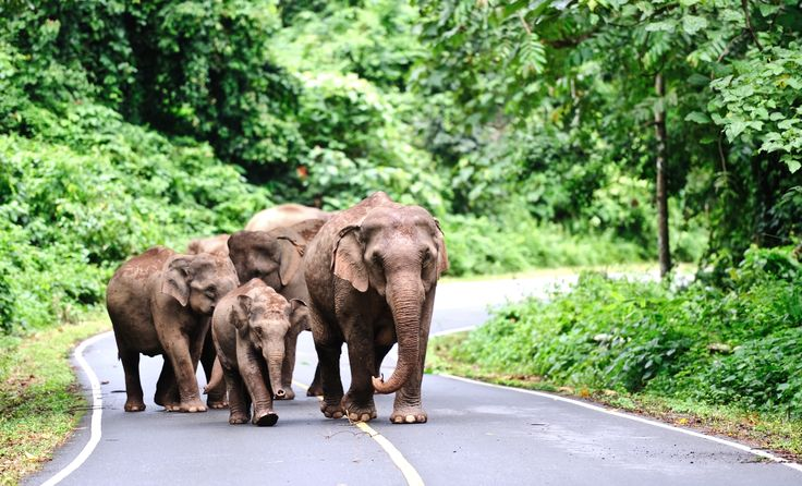 Khao Yai National Park - The Natural Wonders of Thailand Tour