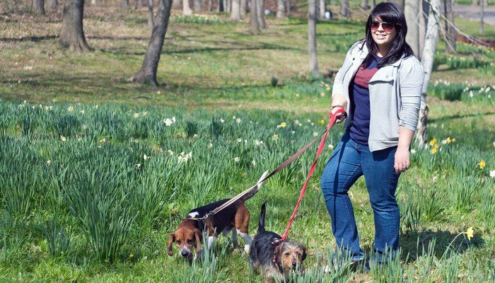 Ask a Dog Walker: Where and How to Pick Dog Walking Insurance? - Top Dog Tips