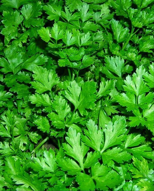 Plante naturiste pentru coxartroza