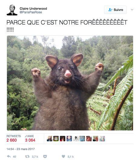 macron france forêt président