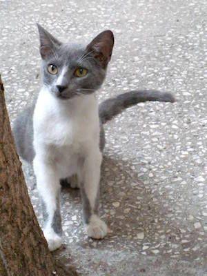 www.ninelivesgreece.com - Adopt a cat