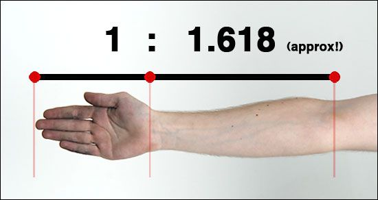 Golden Ratio Examples Human Body