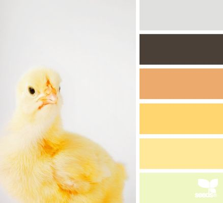 color chick