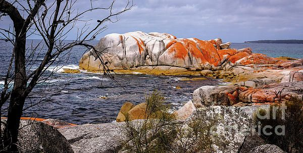 Elephant Rock, Bay of Fires, Tasmania. WATER CALMS THE SOUL. A collection of beach, ocean and water scenes from Australia that took my breath away. 66,000kms of coastline, 11,000 beaches, waterfalls, waterholes, gorges, rivers and creeks. Australia's diversity...we have it all!! Visit my photo gallery and get a beautiful Fine Art Print, Canvas Print, Metal or Acrylic Print. 30 days money back guarantee on every purchase so don't hesitate to bring some 'SOOTHING' in your home.