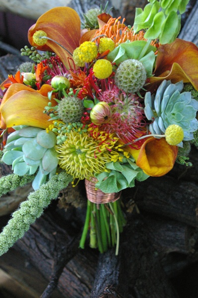 Full texture design. Organic items including billy balls, millet, succulents, pincushion protea, and scabiosa pods