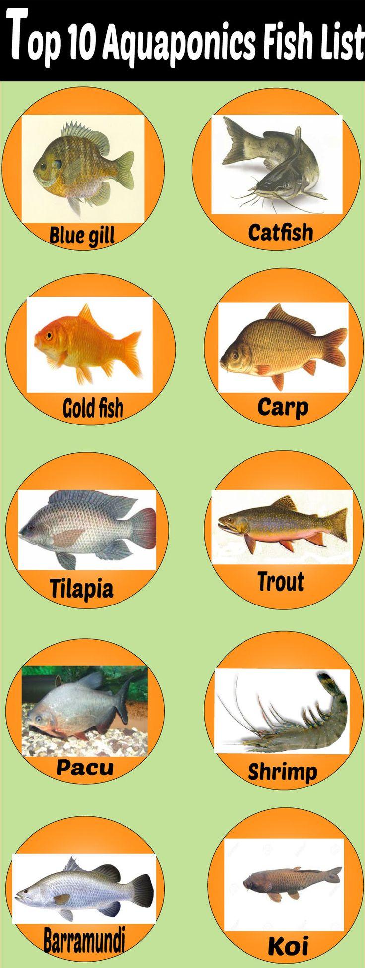 202 best aquaponics images on pinterest aquaponics system