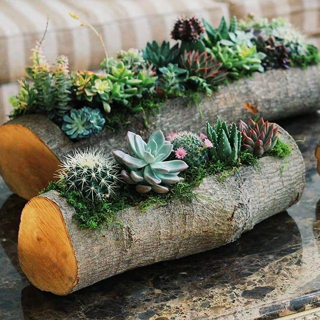 Diy Succulent Potting Mix Australia: Set 2Pcs Succulent Planter Sisters