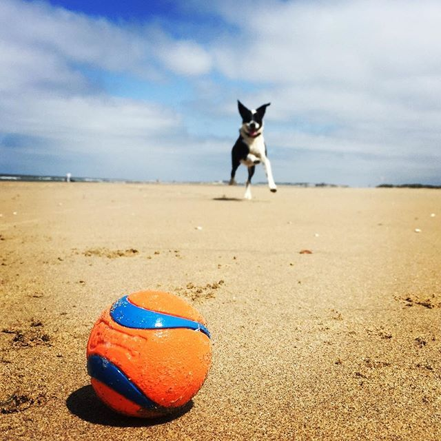 Dog On The Beach With A Chuckit Ultra Ball Makefetchhappen Pet