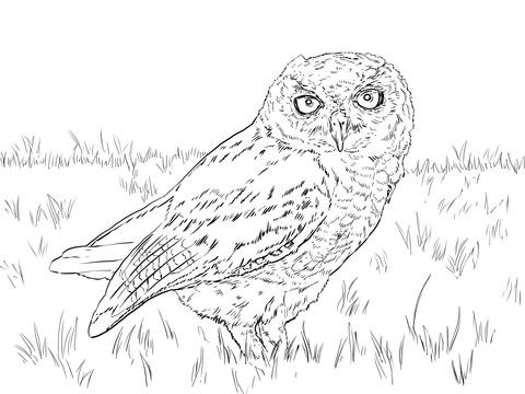 37 best Owls images on Pinterest Drawings Drawing and Owl drawings