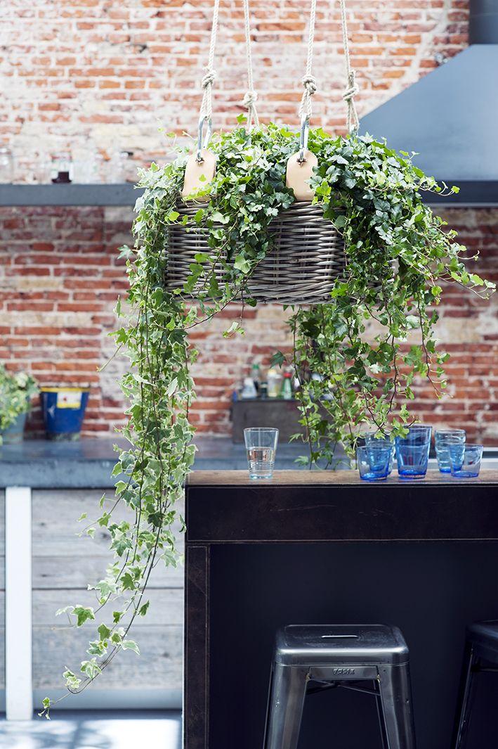 De klimop, groeit lekker vlot en produceert daarbij de mooiste blaadjes met aquarelachtige prints. Die blaadjes kun je nog beter bewonderen als je de woonplant ophangt in deze hippe hangmand. En je kunt 'm zelf maken!