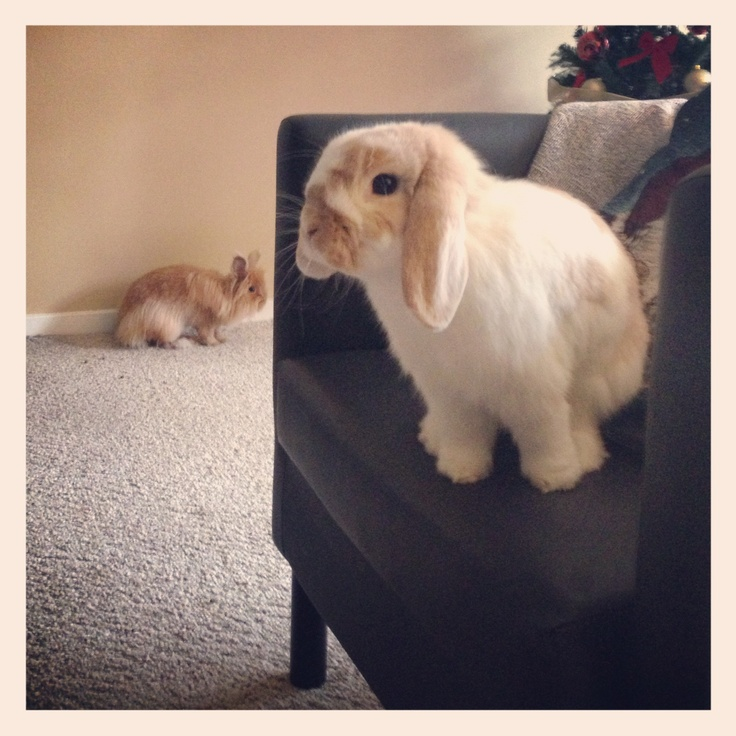 Will seeker bunny find hiding bunny on the chair? - December 23, 2012