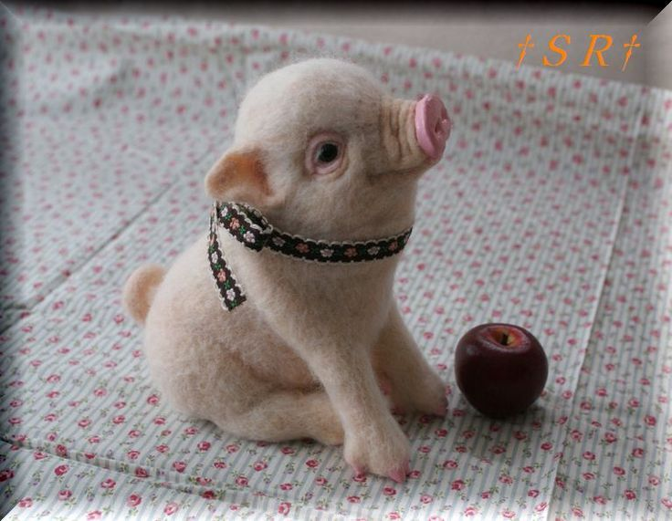 Teacup pig! - I have always wanted one...this or a potbellied.