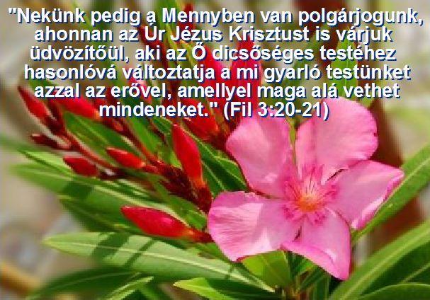 """Fil. 3:21 """"aki az ő dicsőséges testéhez hasonlóvá változtatja a mi gyarló testünket, azzal az erővel, amellyel maga alá vethet mindeneket."""""""