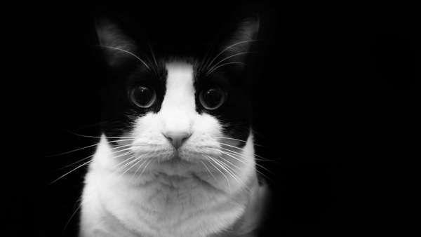 """¿Por qué los gatos """"siempre"""" caen de pie?"""