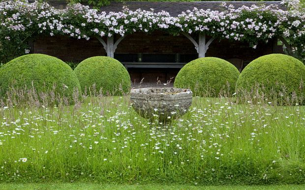 17 best images about garden ideas on pinterest gardens for Wild grass gardens