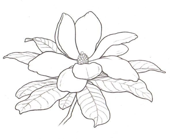 magnolia flower outline - Google Search
