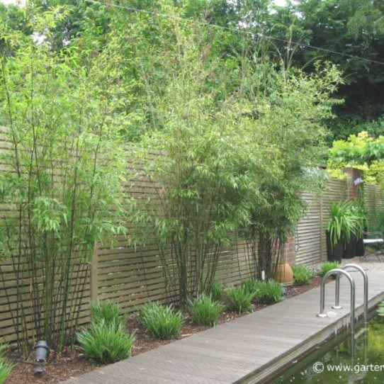 Sichtschutz Garten Pflanzen Google Suche Garten Pinterest