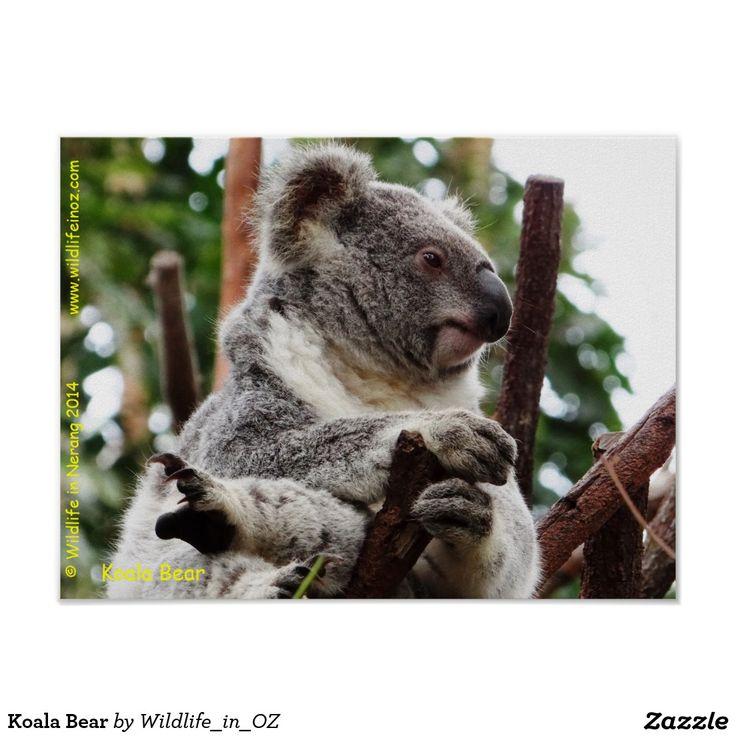 Koala Bear Poster- #australianwildlife #koala #koalabear #queensland #australia #wildlife #poster
