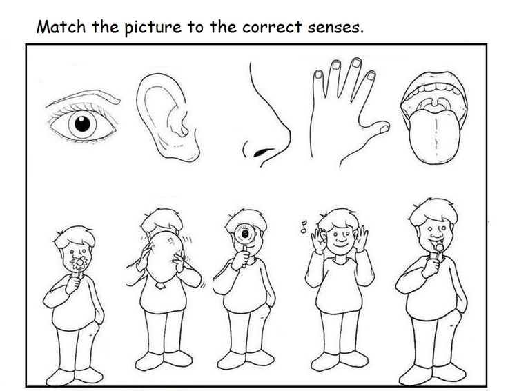 5 Senses Worksheet For Kids 13