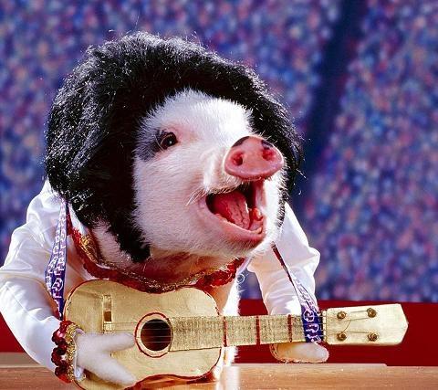 Pig Elvis has left the building. :-)