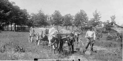 History of Louisiana Cotton Plantations - African American Genealogy & Cemetery Preservation