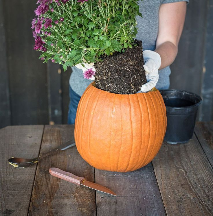 Easy DIY Pumpkin Planter | P. Allen Smith with Bonnie Plants