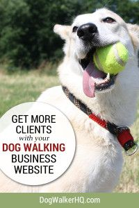 5 Ways Your Dog Walking Service Website can get more Clients