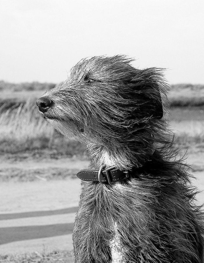"""Windswept"" By Marc Melander, Via 500 px ...  Fuzzy Face in the Wind, melts my heart~!~"