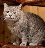 nochnoy-ohotnik | Стеша - Пушистый черный красавец. Годик. Ласковый, но осторожный котик.  http://priuyt.wix.com/nochnoy-ohotnik#!-/c15o2