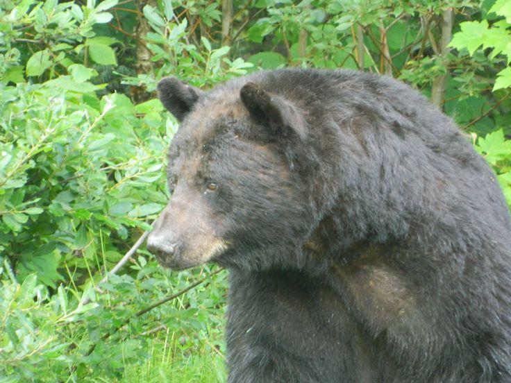Video black bear camp nick #7