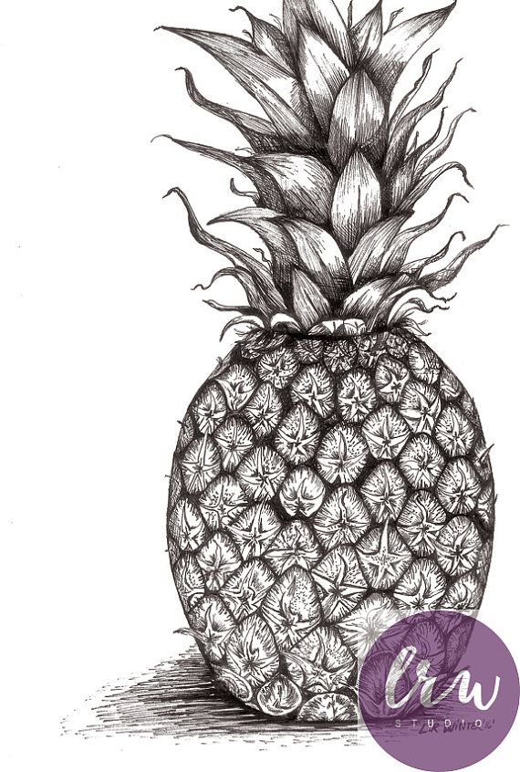 Pineapple Art Print Pen And Ink Drawing Black And White Modern