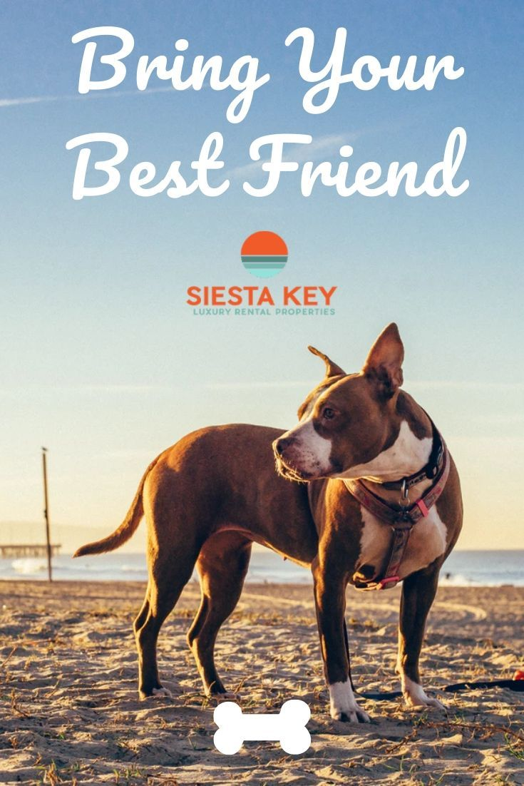 Pup Suds In 2020 Dog Friendly Rentals Pet Friendly Beach Dog Friends