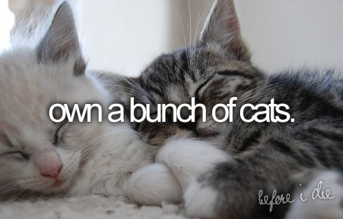 or at least one: Snuggles, Bucketlist, Kitty Cat, Buckets Lists, Old Lady, Cuddling Buddy, Kittens, Crazy Cat Lady, Animal