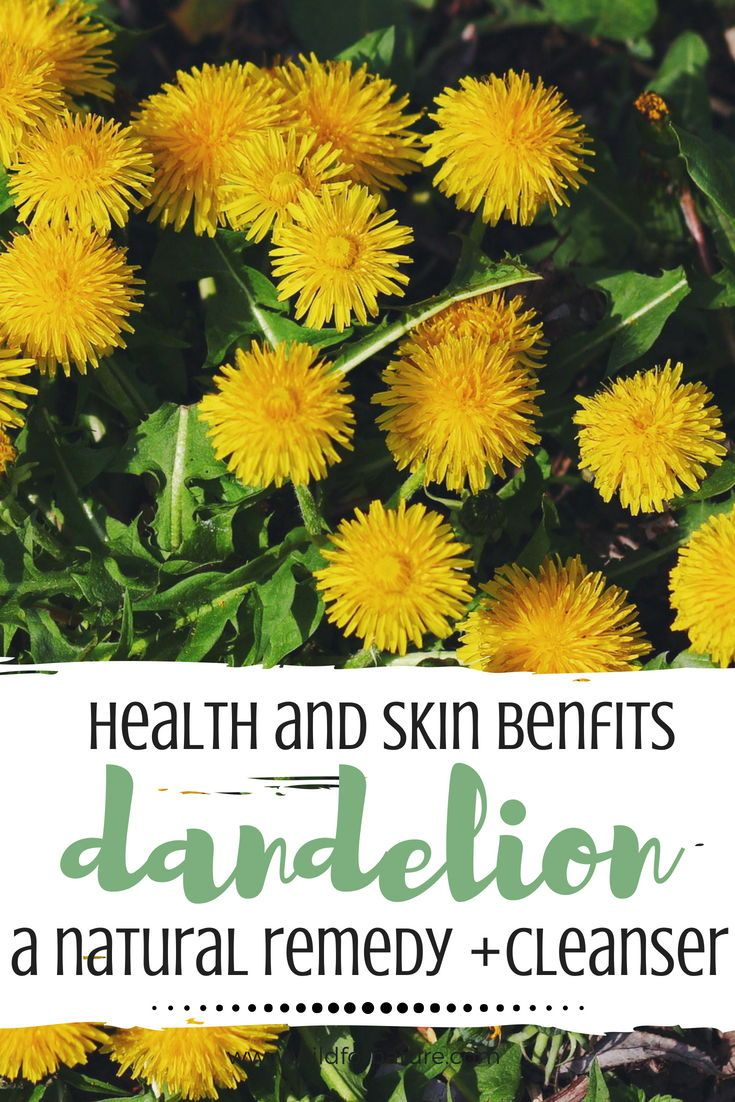 Amazing Dandelion Health And Skin Benefits Wild For Nature Skin Benefits Dandelion Benefits Holistic Skin Care