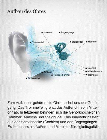 Schema des Ohres: Außen- und Mittelohr leiten die Schallwellen zum Innenohr. Dort wandelt die Cochlea die akustischen Signale in elektrische Impulse um.