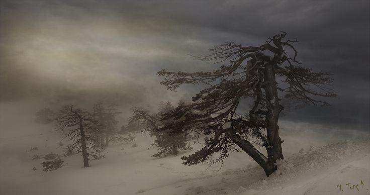 Photo I will survive by M. Tunc Kolverdi on 500px