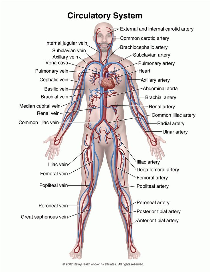 Cardiovascular System Function | Cardio Health Research