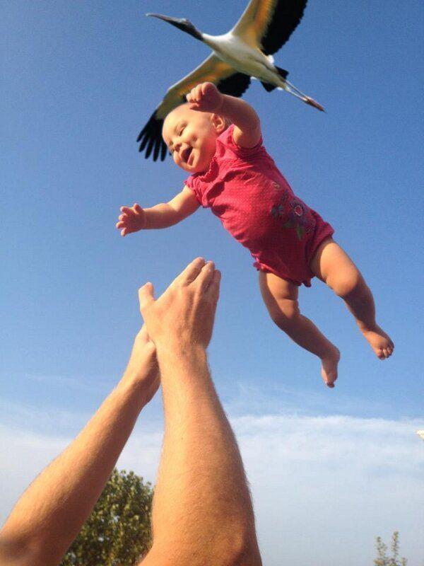 Ooievaar dropt een baby
