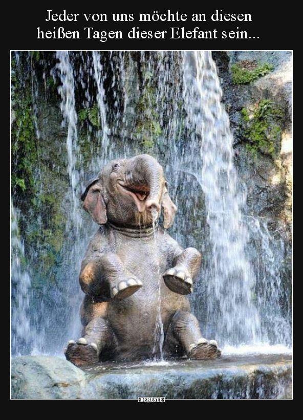 Jeder von uns möchte an diesen heißen Tagen dieser Elefant..   Lustige Bilder,… – elka  💥