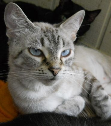 genetic tests for cats