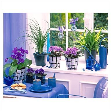 1000 ideas about saintpaulia on pinterest african violet flowering house plants and drama queens. Black Bedroom Furniture Sets. Home Design Ideas