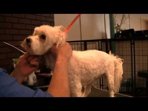 Dog Grooming Basics to Make Your Pooch Look Its Best