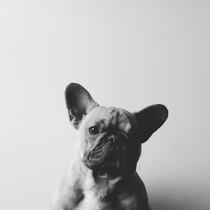 Unreal portraits of dogs by Alex Neary using VSCO Cam