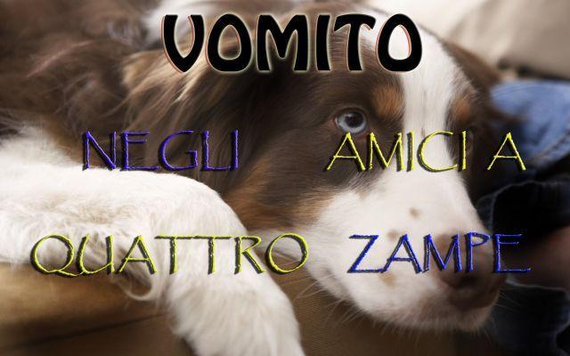 Vomito e nausea, rimedi Omeopatici per i nostri amici a 4 zampe #blog #web #twitter #fb