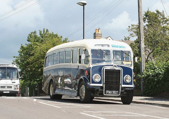 Leyland - Royal Blue