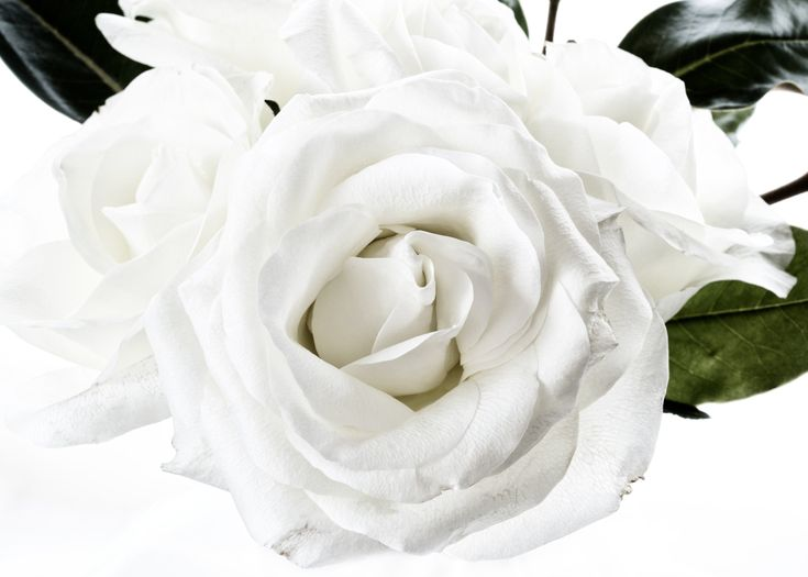Stunning white rose from a gorgeous mothers' day arrangement. The perfect artwork to remember a beautiful arrangement. Floragraphica | Modern flower preservation with photography
