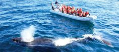 Puerto Vallarta, Mexico Whale Watching. On my bucket list to go back during whale season  #PUertoVallarta #Jalisco #Mexico #Travel #whale #Whales #tour #RivieraNayarit http://bit.ly/1pEAJpf