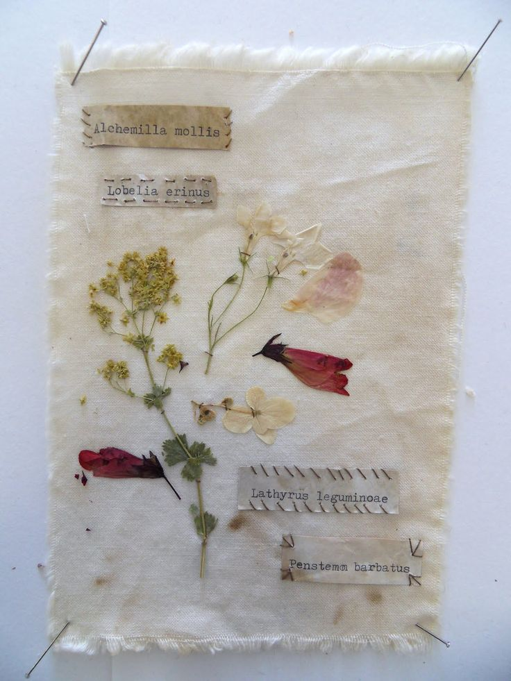 Pressed flower sample. So beautiful.