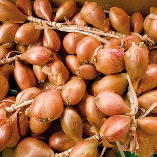 Ako správne uskladniť cesnak, cibuľu a zemiaky