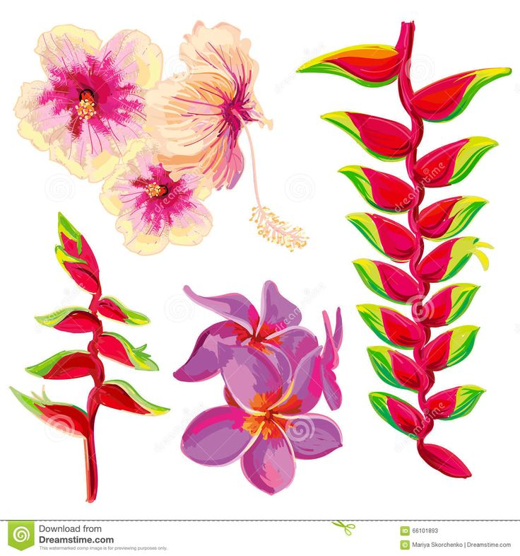 Image result for flores tropicales ilustracion